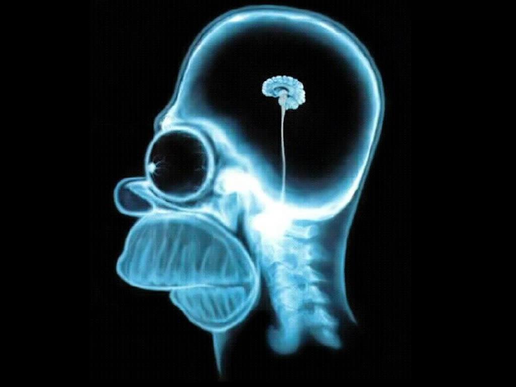 homer brain